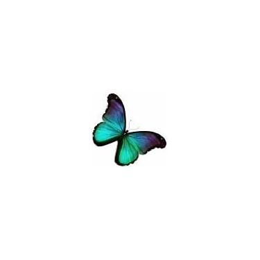 DLUO Papillon Organic EcigOnly